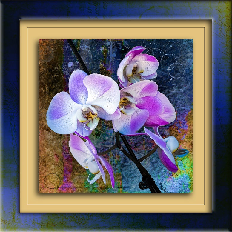 Orchid-1791 art blog