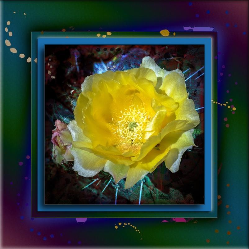 Prickly Pear Blossom-1785 Art blog