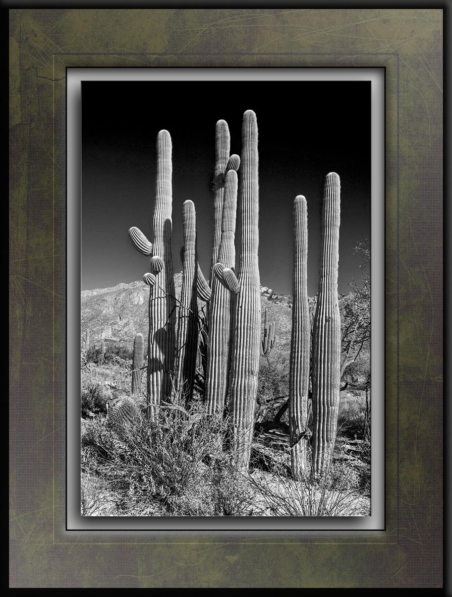 Saguaro Cactus B&W-1154 blog.jpg