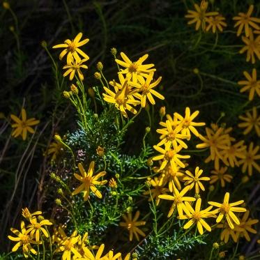 Tanuri Ridge Spring-1676 blog