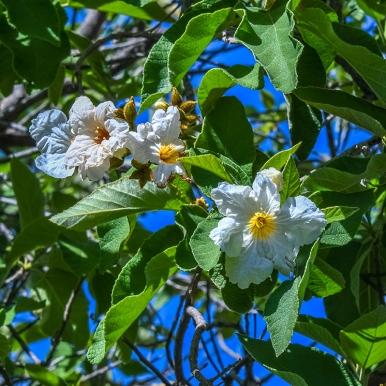 Tanuri Ridge Spring-1681 blog