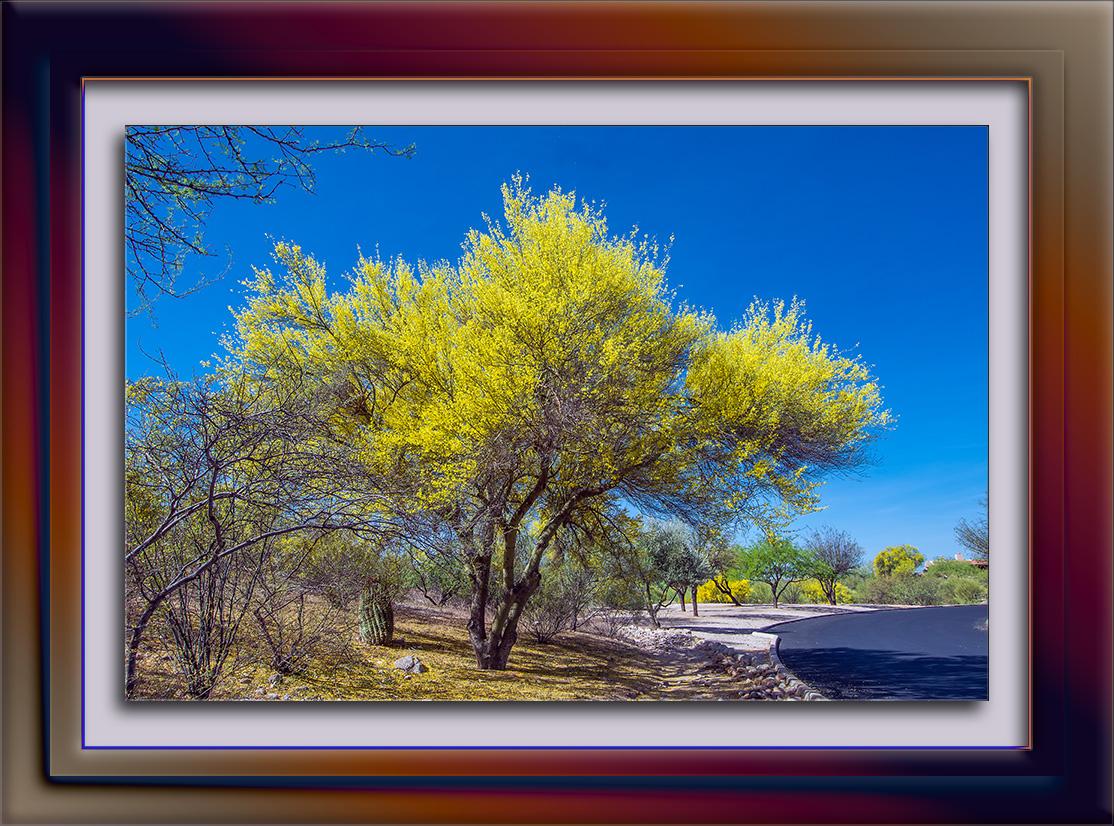 Tanuri Ridge Spring-3457 blog