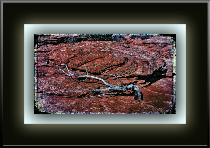 The Wave March 2012 - 2012-03-21 11-11-07 tree branch_art II blog