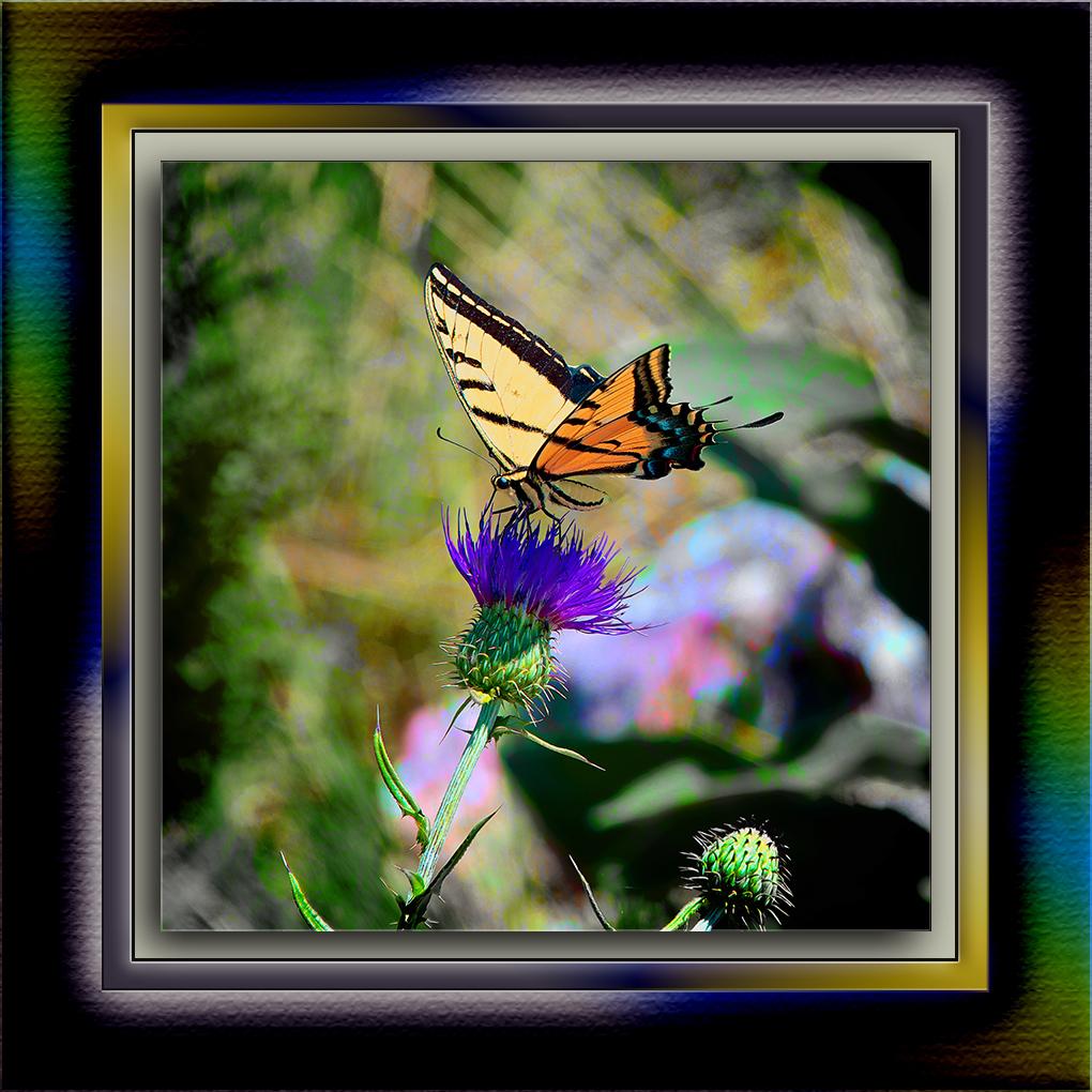 SCVN Nature Walk 08-08-12