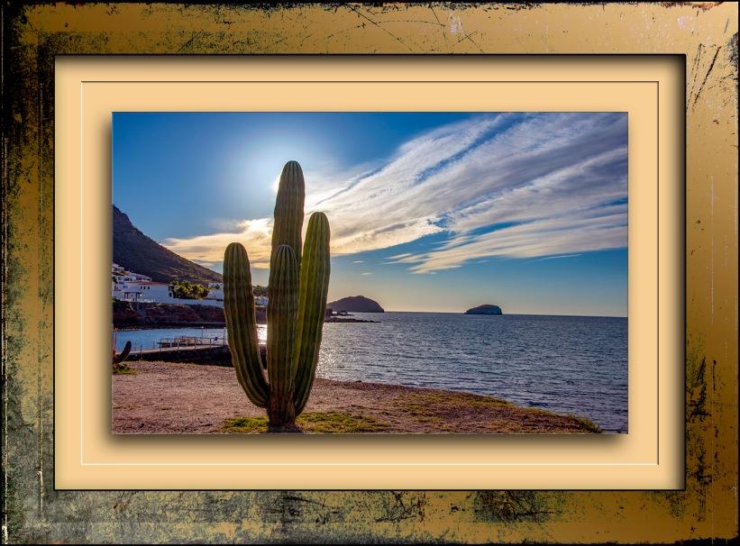 Cordon Cactus blog