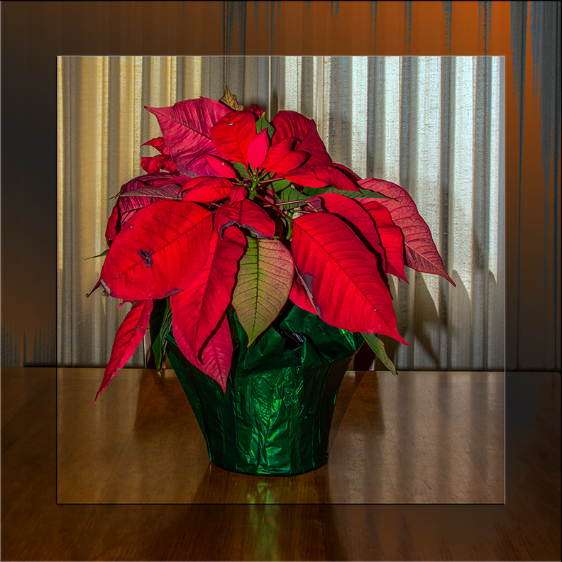poinsettia-3525 blog
