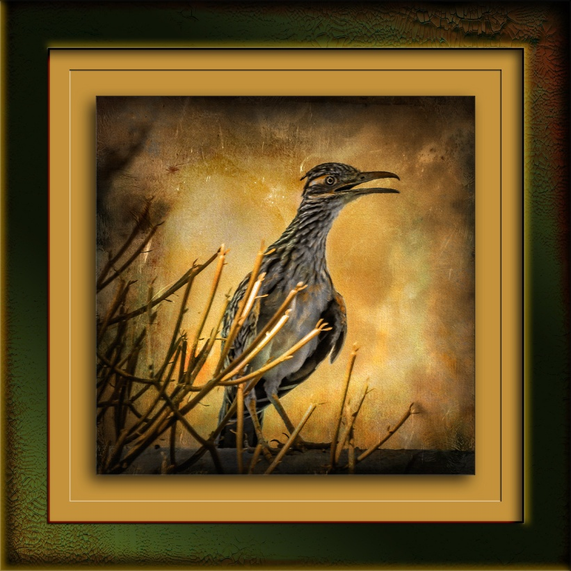 Roadrunner-0283 art blog