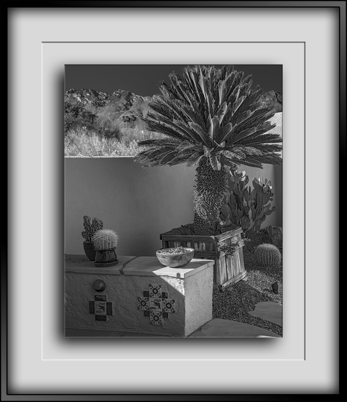 Sago Palm-3529 B&W blog
