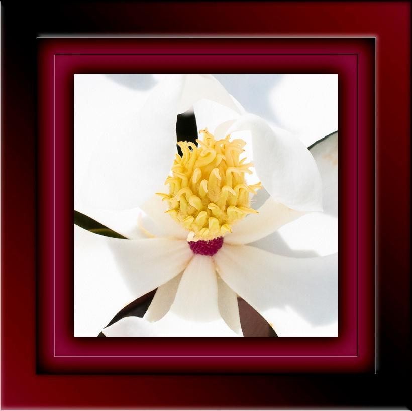 white-flowerdsc_1610-blog - 2