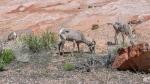 Zion National Park-1773blog