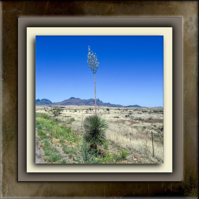 Arizona Wine Country-1895 blog