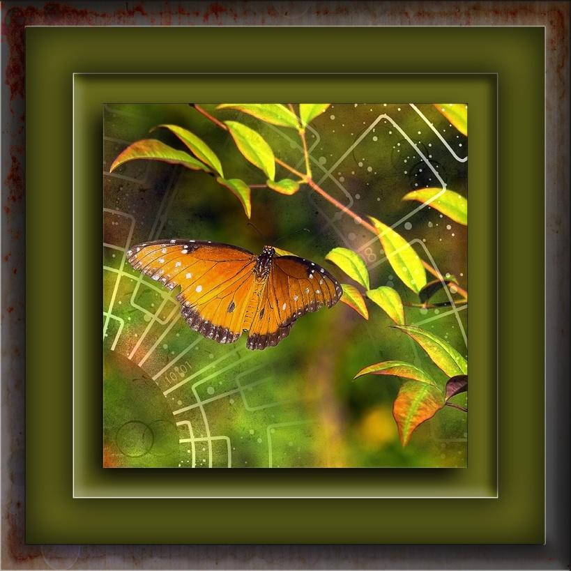 Butterflies Queen blog