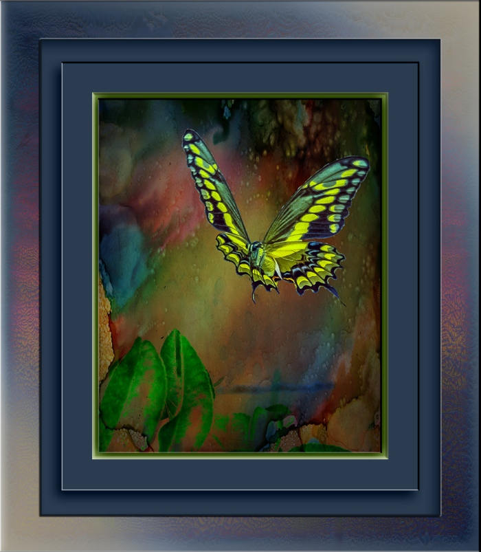 two-tailed swallowtail butterfly (1 of 1)-2 art blog
