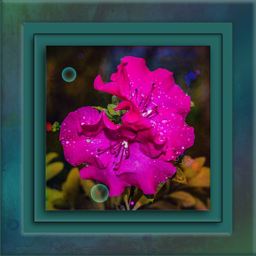 Azalea-3568 - II Phooto-Artistry blog