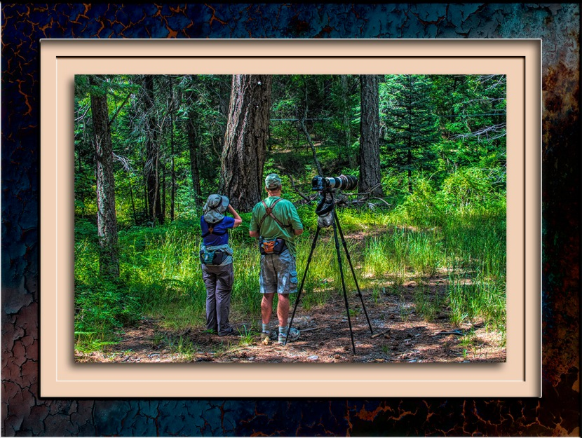 Birders (1 of 1)-Edit HRD blog