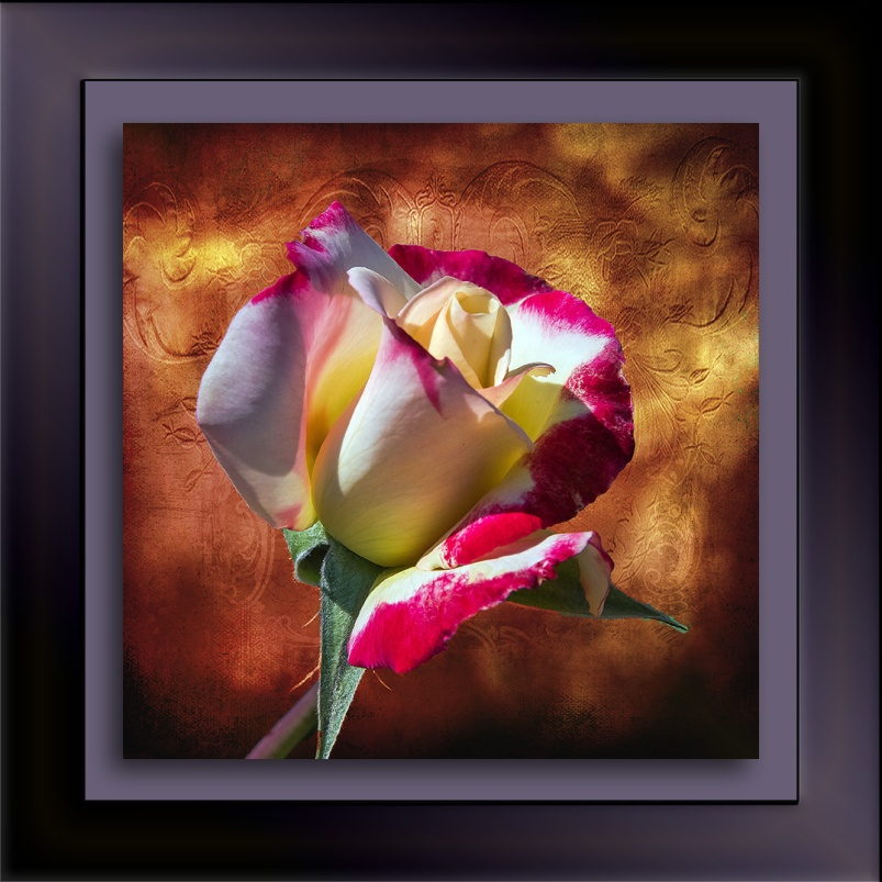 Rose-1955 art blog