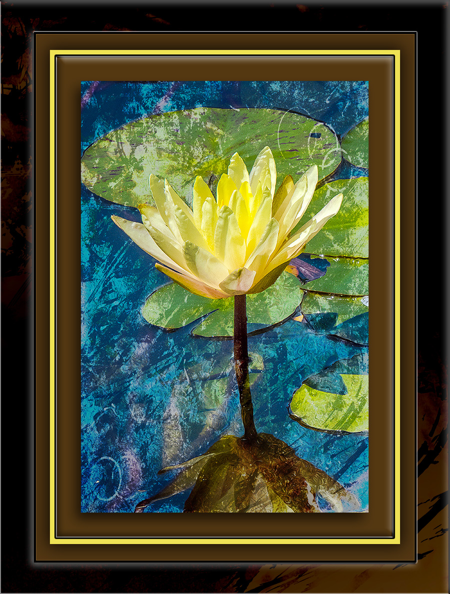 Water Lily Art blog