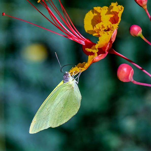 Butterflies-2099 blog