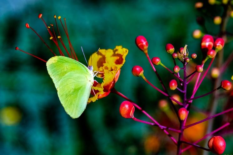 Butterflies-2101 blog