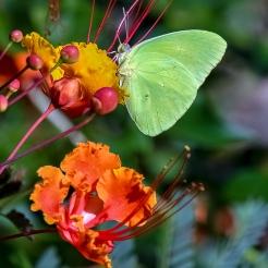 Butterflies-2102 blog