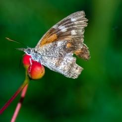 Butterflies-2105 blog