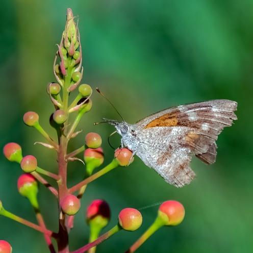 Butterflies-2106 blog