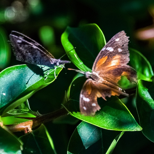 Butterflies-2109 blog