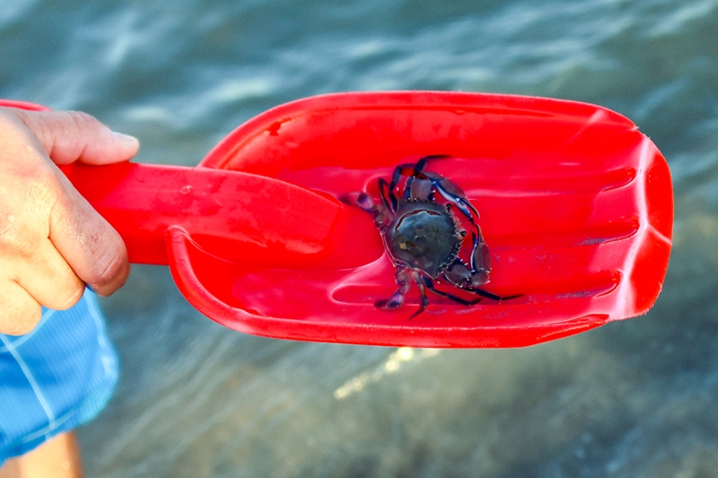 Galveston (56 of 106) Blue Crab blod