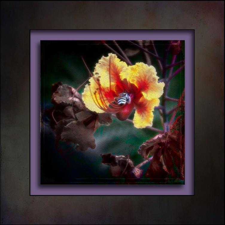 Mexican Bird of Paradise-7772-Edit art-II blog