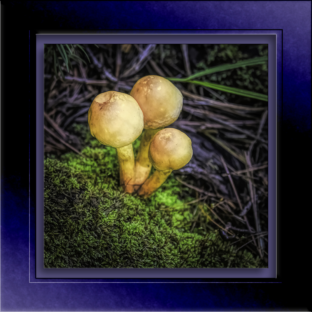 Mushrooms-0278-blog