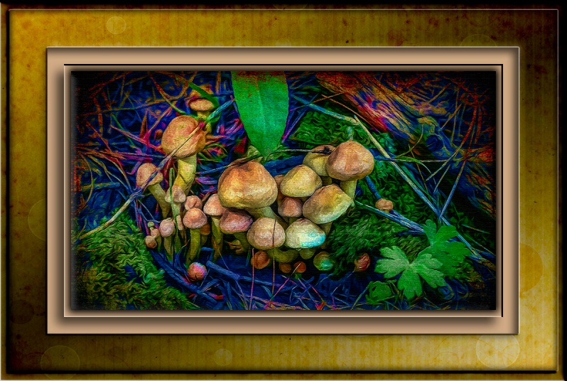 Mushrooms-0281-art blog