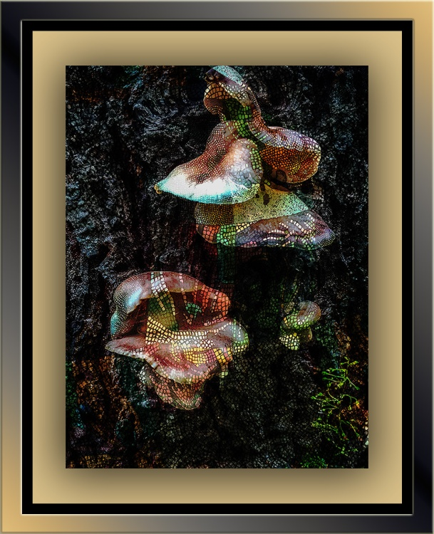 Mushrooms on Butterfly Trail (1 of 1)-3 art blog