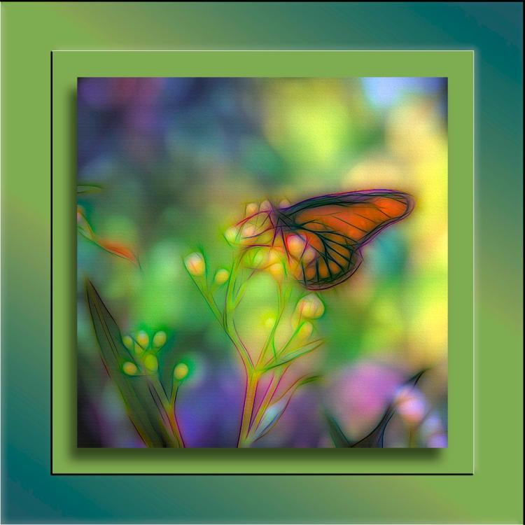 Queen Butterfly (1 of 1)-2-Edit-2 blog