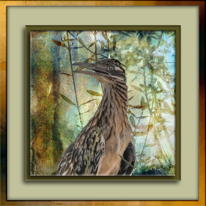 Roadrunner-0295 art blog