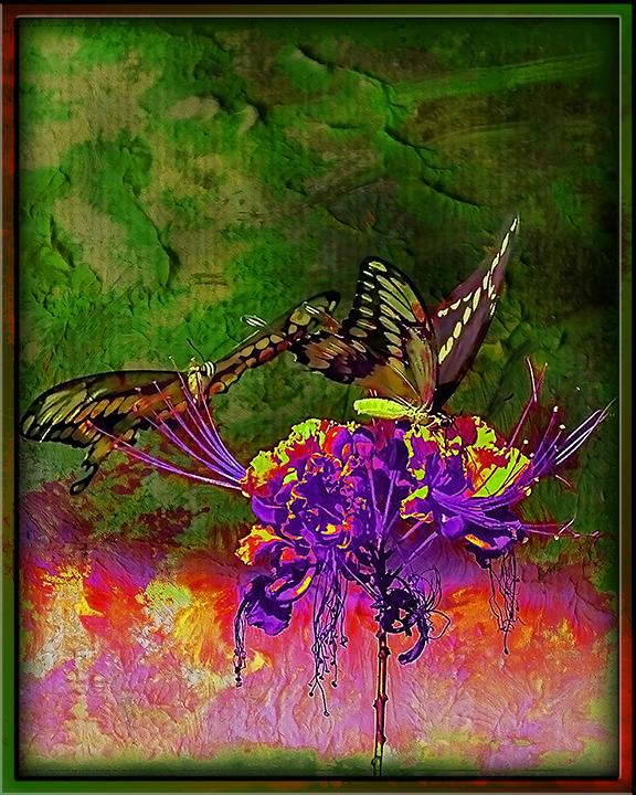 Two-Tailed Swallowtail (1 of 1) grunge Art blog