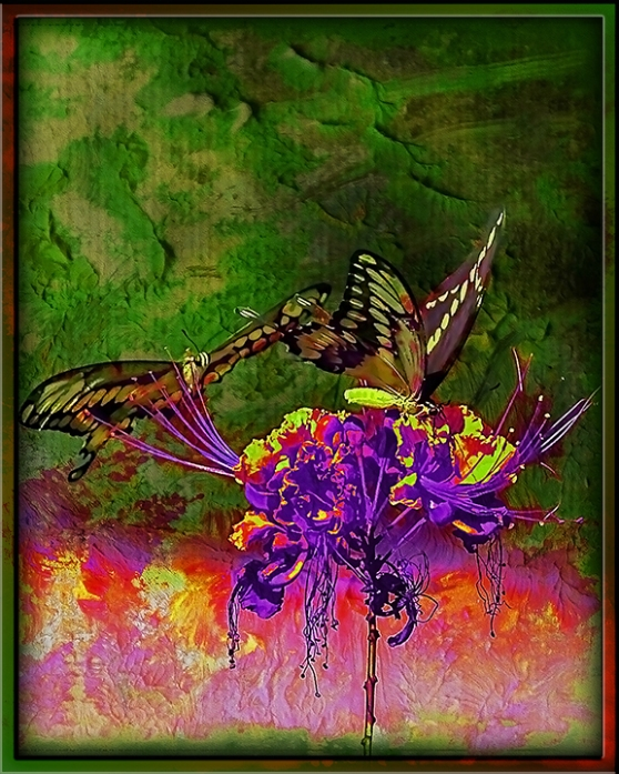 Two-Tailed Swallowtail (1 of 1) grunge Art blog