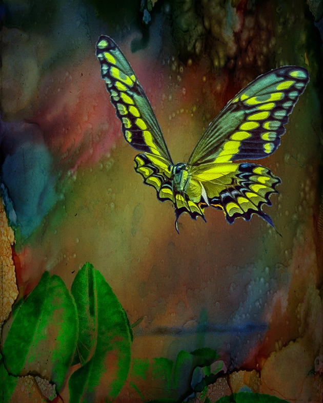 two-tailed swallowtail butterfly art blog