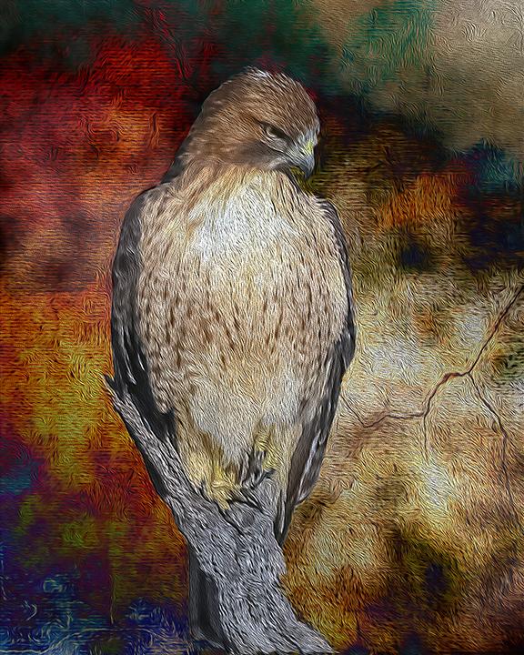 Cooper's Hawk-0814 art blog
