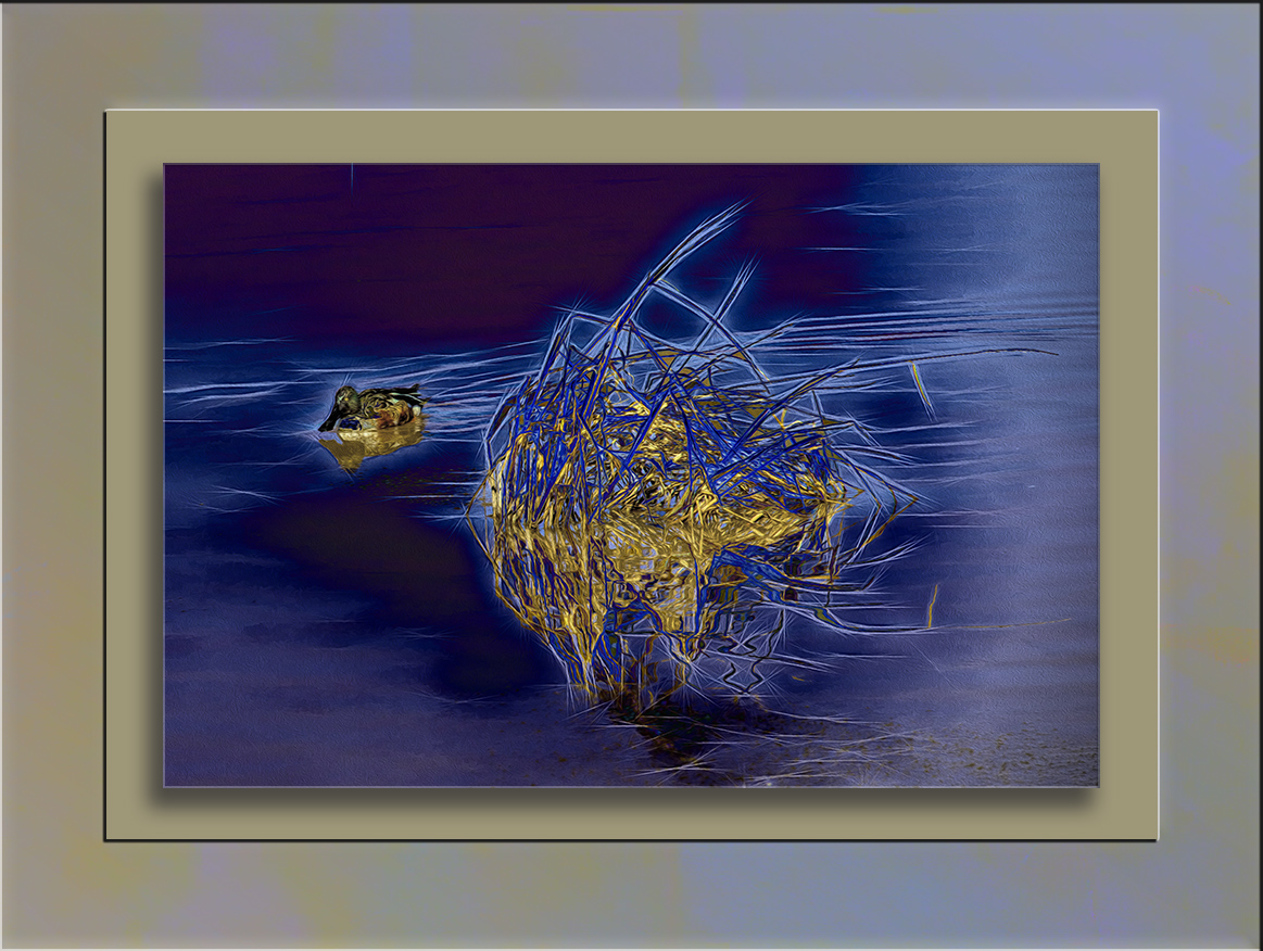 Duck and Dried Weeds-art-blog-II