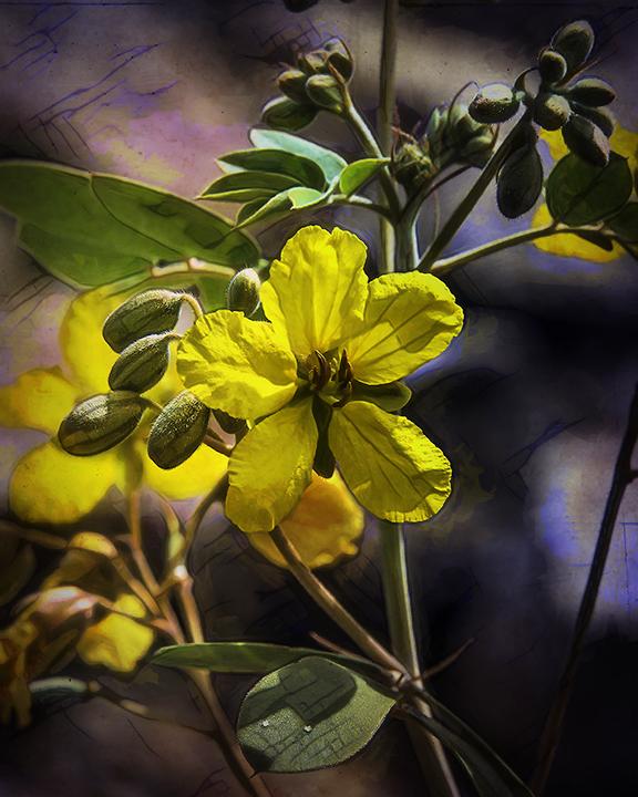 Sabino Canyon September 4, 2015-8859 wildflower art-blog