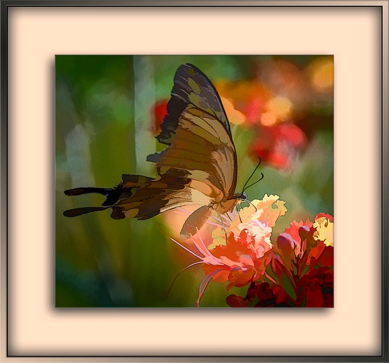 Two-tailed Swallow Tail art-blog-1