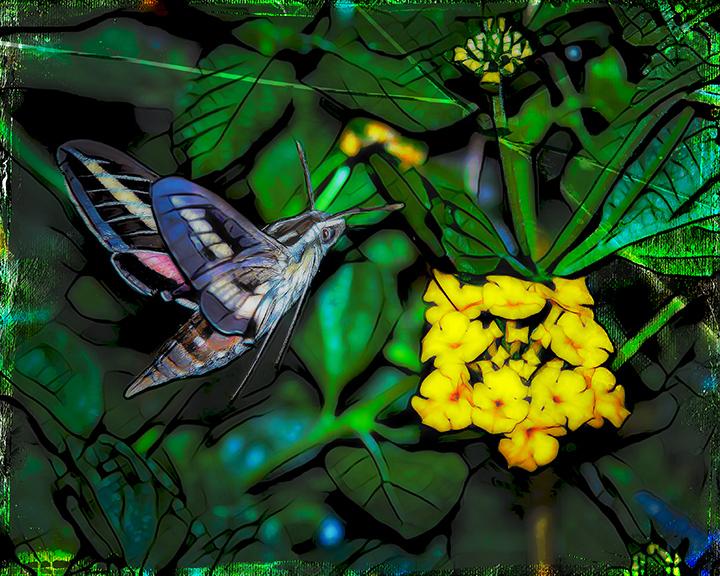 White-lined Sphinx Moth-Art-2-blog