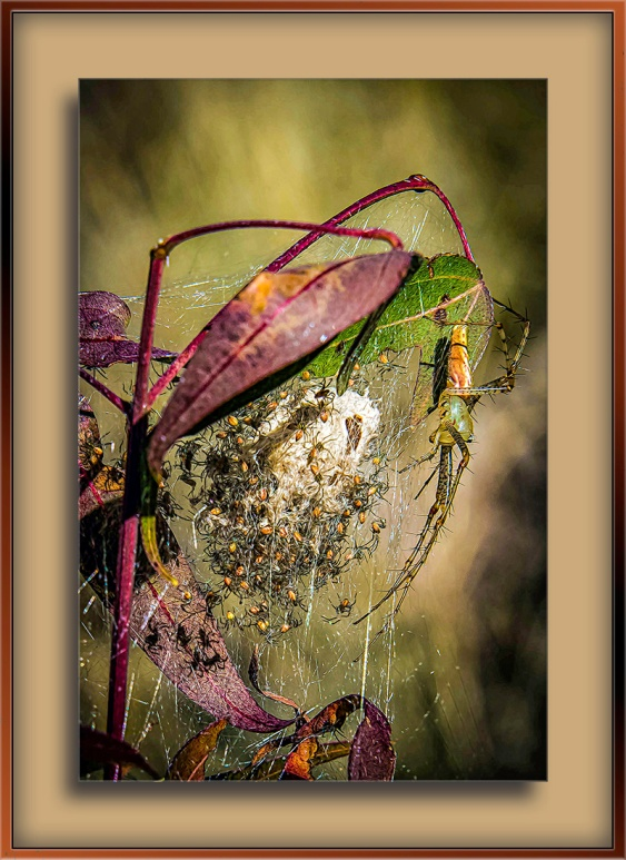 A Good Year for Spiders-Edit-2-blog