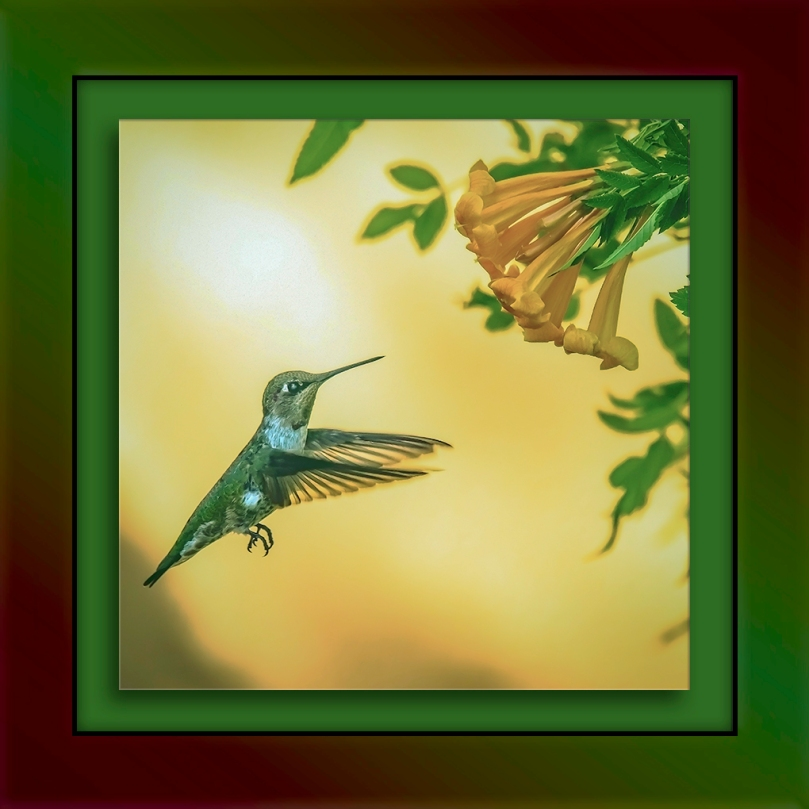 Anna's Hummingbird-Edit-2-blog