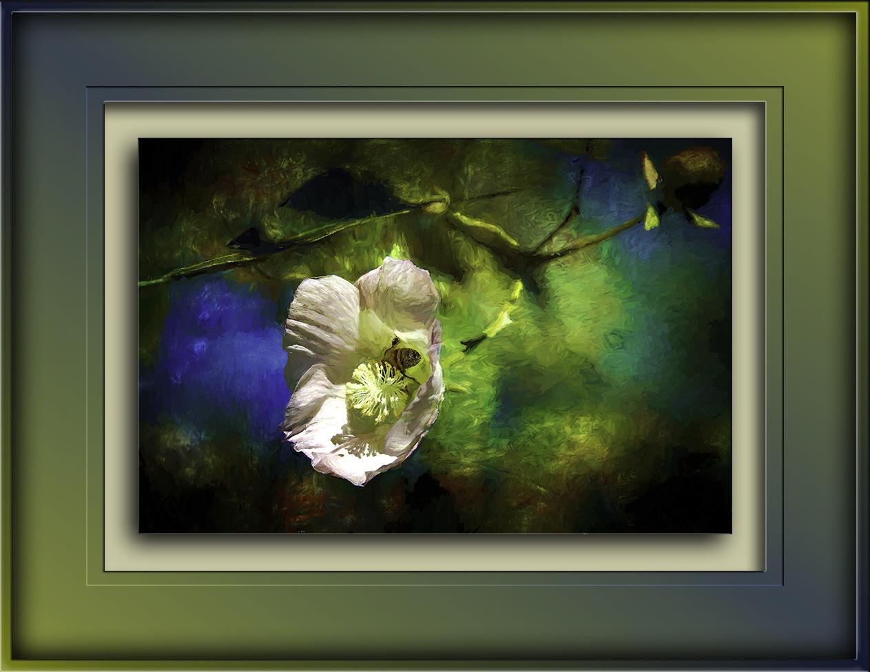 Bee in Desert Cotton Blossom-Edit-blog-2