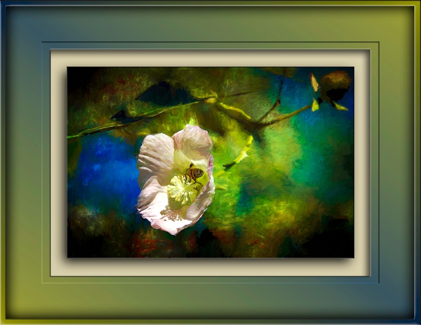Bee in Desert Cotton Blossom-Edit-blog-2