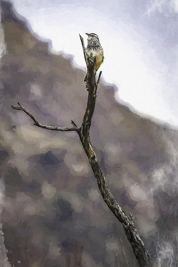 Cactus Wren-Edit-1-art-blog