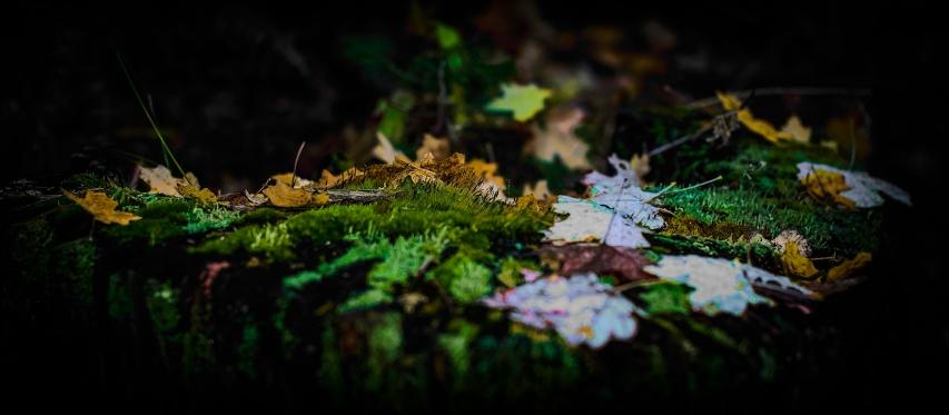 Fall Leaves on Tree Stomp-Edit-2-art-blog.jpg