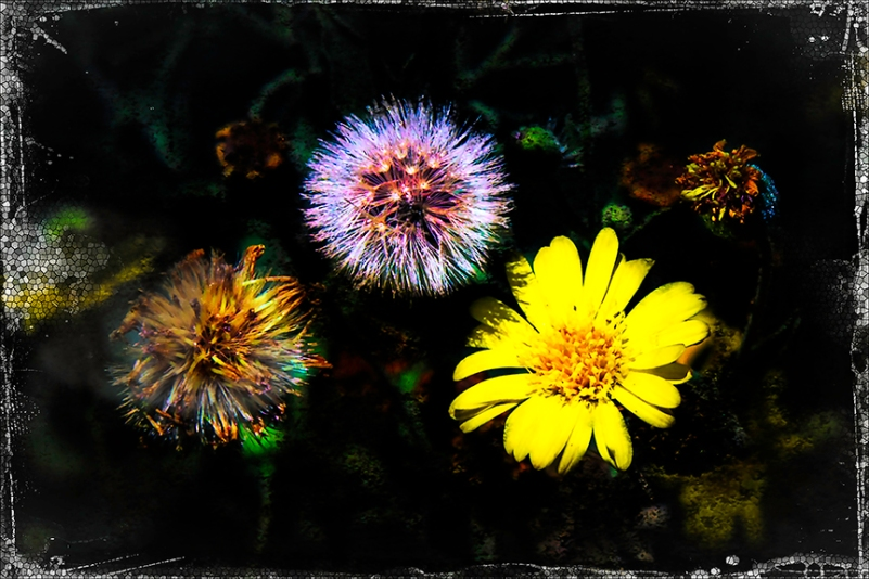 Fall Wildflowers-Edit-1-art-blog
