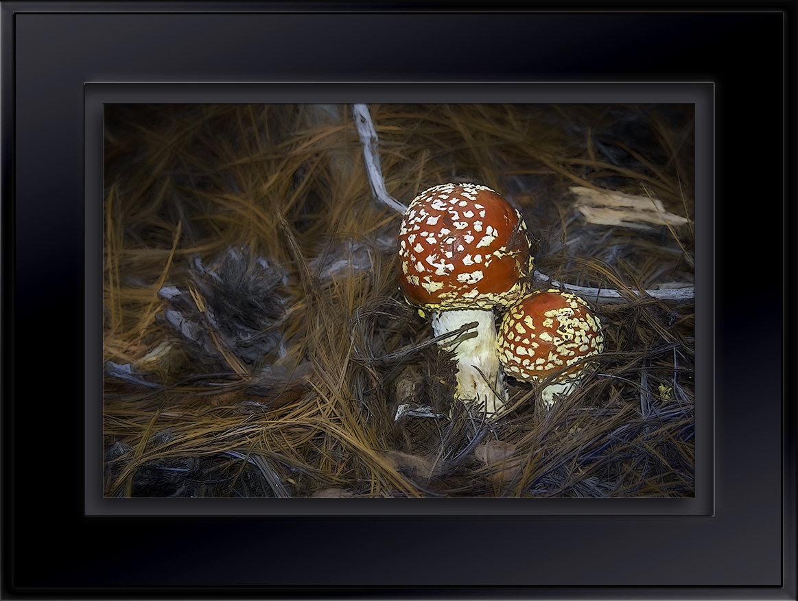 Mushrooms-Edit-blog